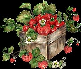 tube fraise