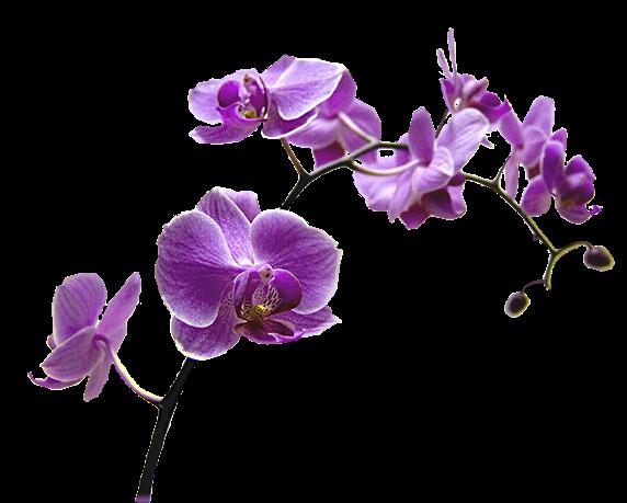 Výsledok vyhľadávania obrázkov pre dopyt png gif orchidea