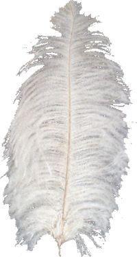 tube plume
