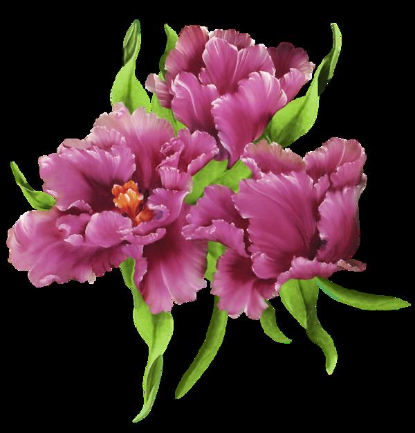 tube fleurs purple