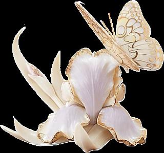 tube fleurs iris