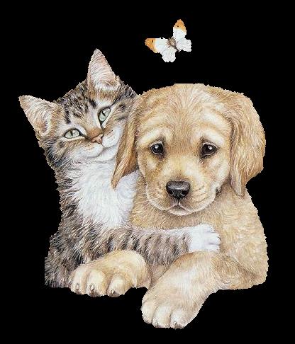 Tubes chiens - Image animaux gratuite ...