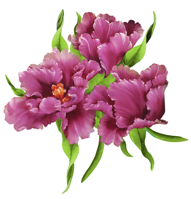http://purplefolie.p.u.pic.centerblog.net/o/8955726b.png